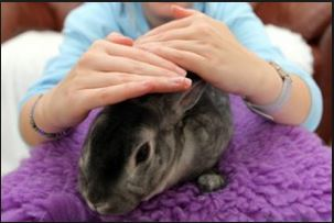 animal reiki rabbit